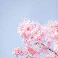 Photo by TOMOKO UJI on Unsplash
